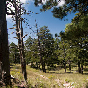 201208-wg-santa-fe-wildlife-in-the-guadalupe-mountains