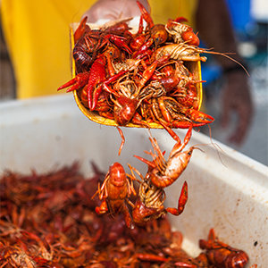 201404-wg-houston-seafood-in-lake-charles-louisiana
