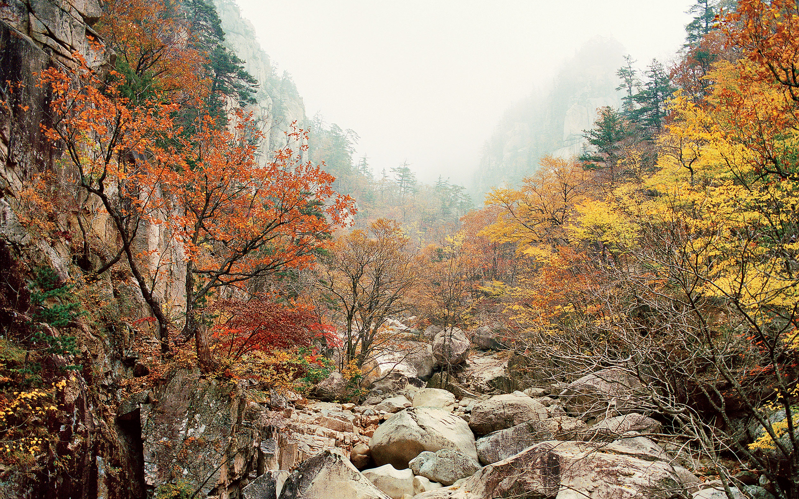 Fall Foliage In South Korea Travel Leisure