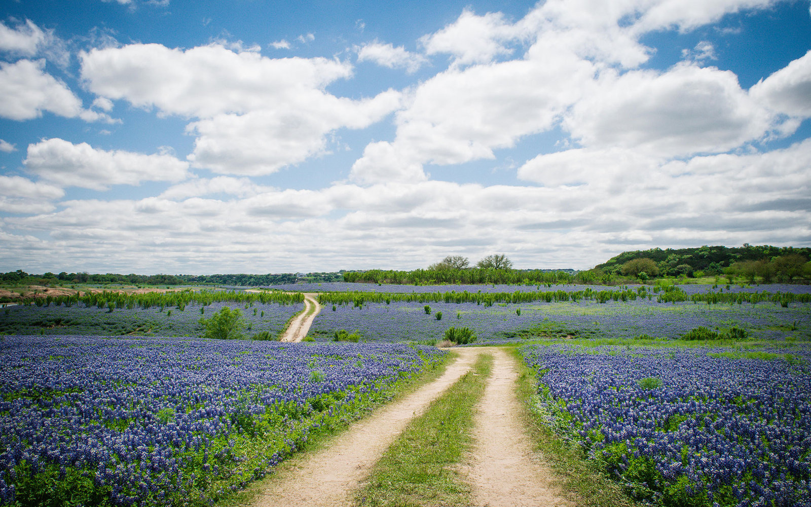 highway through the flower feilds on the Bluebonnet Trail, TX