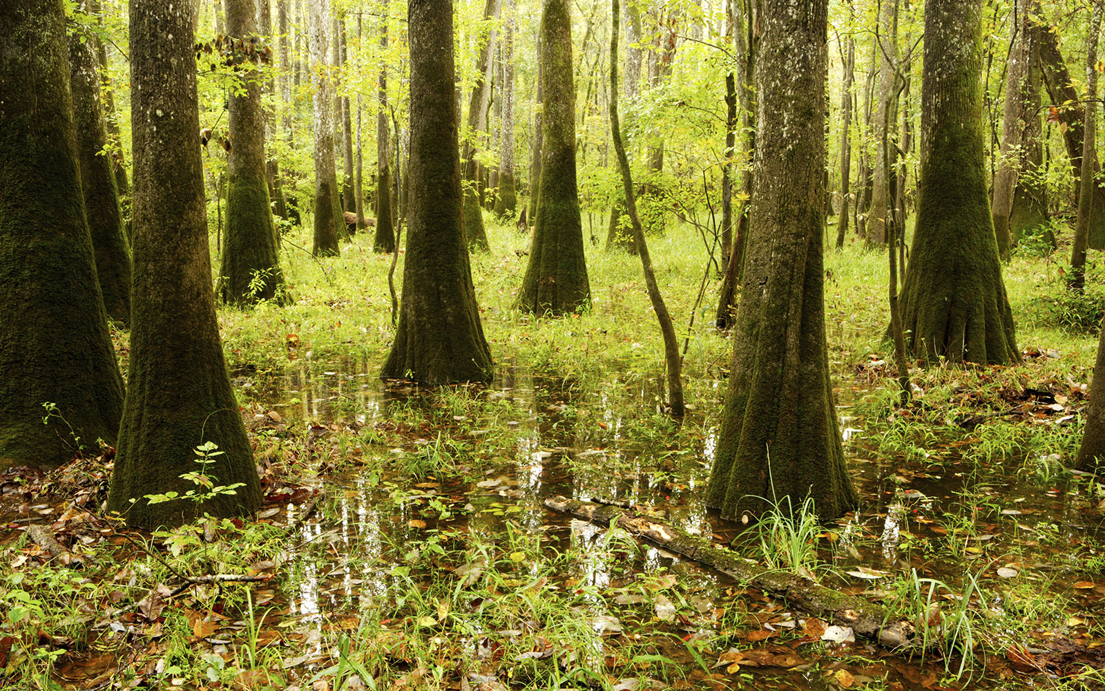 Congaree National Park in Hopkins, South Carolina