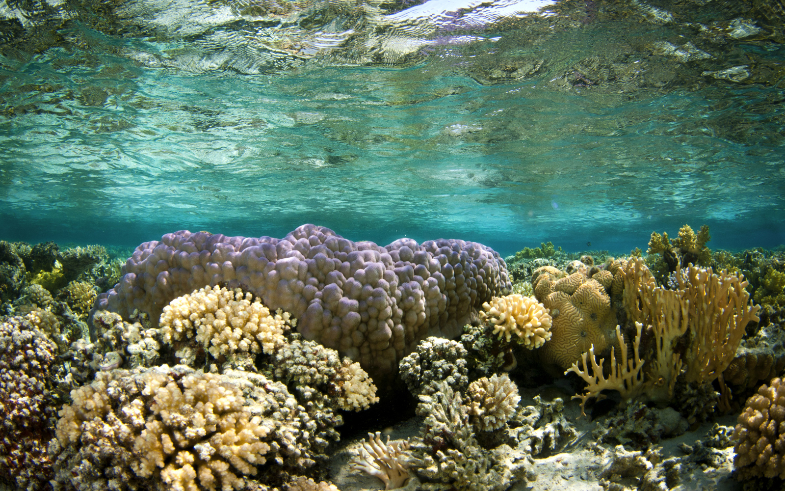 How Sunscreen May Be Destroying Coral Reefs