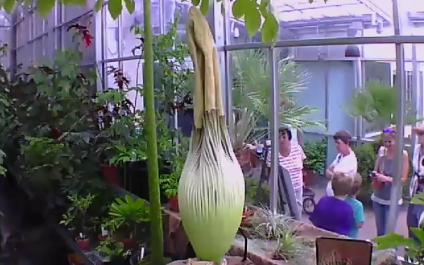 Video Everyone Is Waiting For This Stinky Flower To Bloom Travel Leisure