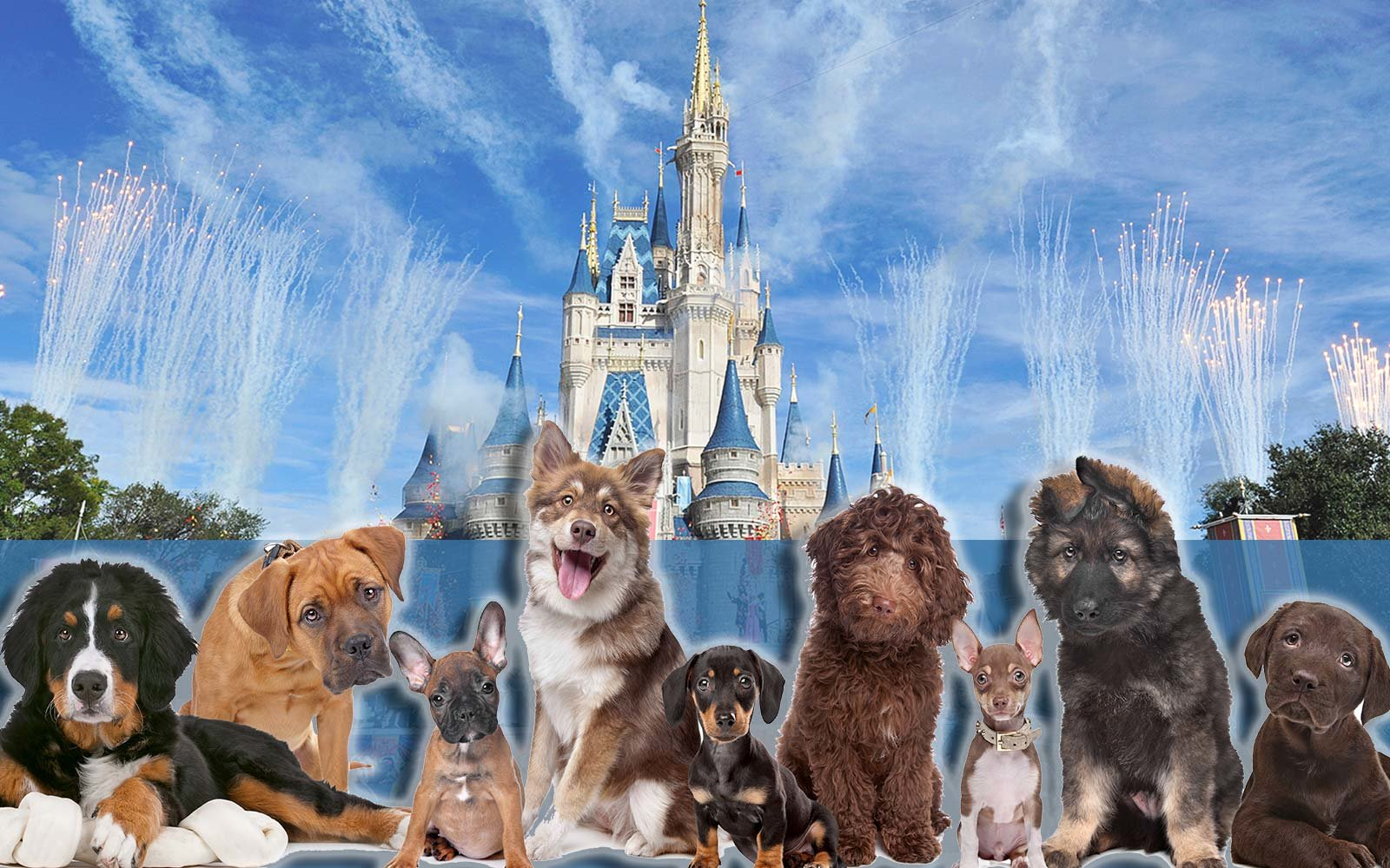 Walt Disney World to allow dogs at four of its resort hotels