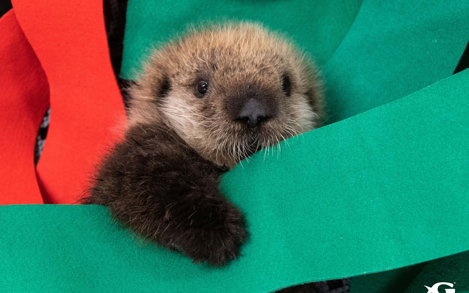 2 Stranded Baby Sea Otters Have Found A New Home At