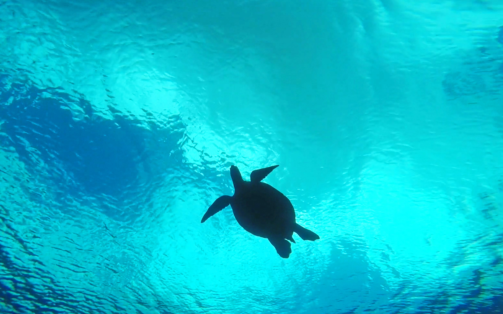 A Guide to Snorkeling With Turtles in Maui
