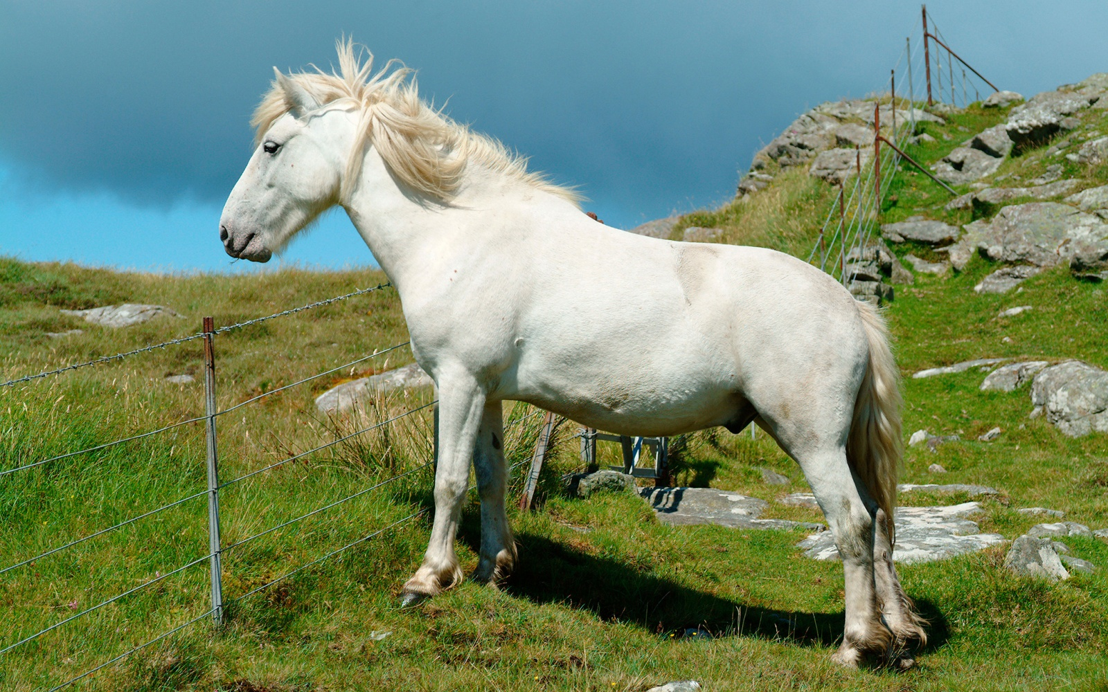 horse at Holy Isle meditation retreat in Isle of Arran, Scotland