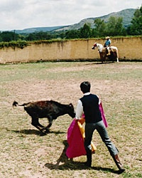 200411_bullfighting_200