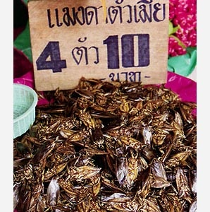 Fried Water Beetles, Bangkok, Thailand