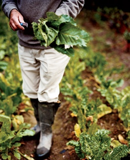 Jeremy Green, of Ballyvolane House, farms spinach in the walled garden, which dates back to the 18th century.