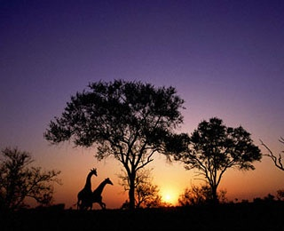 sunset through the trees in Kruger National Park, South Africa