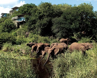 singita-sabi-sand-200812-ss-article