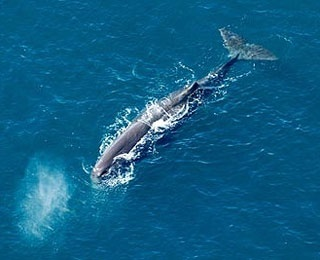 Kaikoura Whale Watch Flight, New Zealand