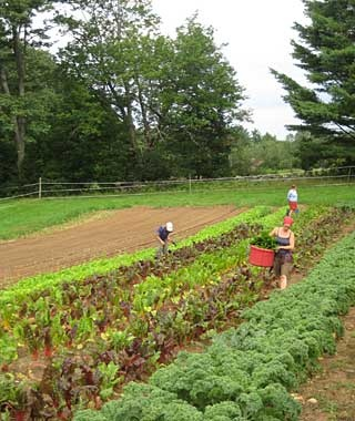 Organic farm work, all over the U.S.Worldwide Opportunities on Organic Farms (WWOOF) USA