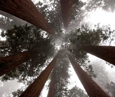 sequoia-forests-200904-ss