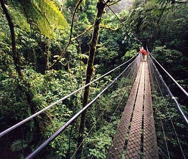 Santa Elena and Monteverde Cloud Forest Reserves, Costa Rica