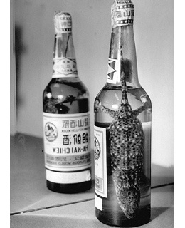 Lizard Wine (Hejie Jiu)China