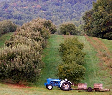 Sky Top Orchard, Zirconia, NC