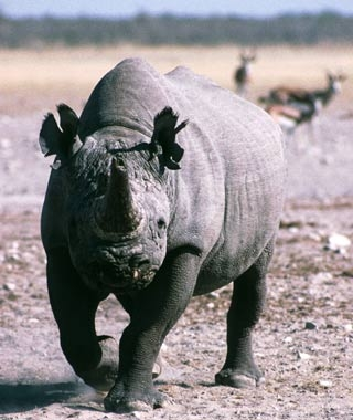 200911-safaris-black-rhinos-ss