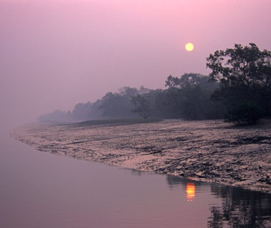 Sundarbans Mangroves