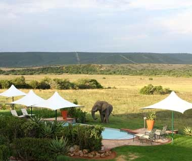 #27NEW Shamwari Game Reserve (93.00)Eastern Cape, South Africa