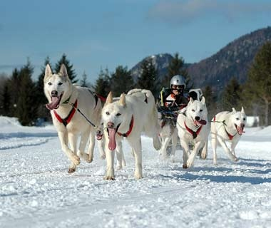 Dogsled Trip