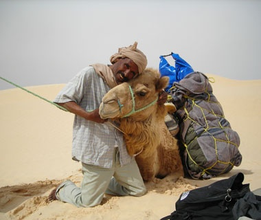 camel in the sands of the Sahara desert