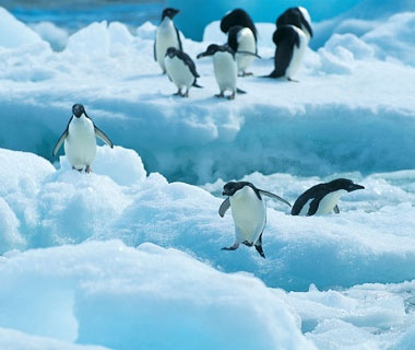 Brave the Elements with Penguins: Antarctica