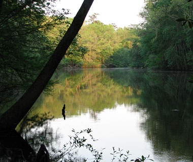 Congaree National Park,SC