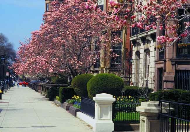 "Lined with beautiful flowering magolias in the spring, Commonwealth Avenue is often referred to as Boston's ""Grand Boulevard""."