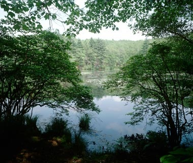 Massachusetts: Walden Pond