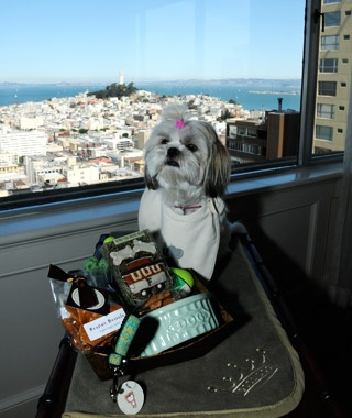 America S Best Dog Friendly Hotels Travel Leisure