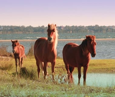 Shackleford Banks, NC