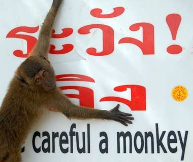 201010-w-funnysigns-monkey