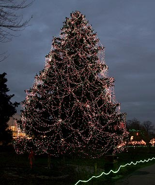 Toledo Zoo's Christmas Tree