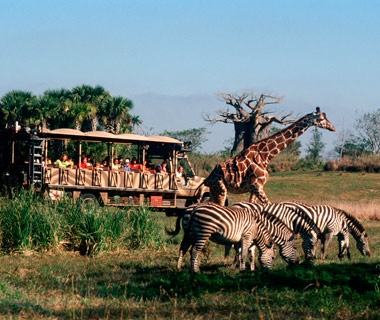 Kilimanjaro Safaris (Disney's Animal Kingdom)