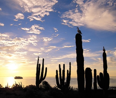 Baja California/Sea of Cortez