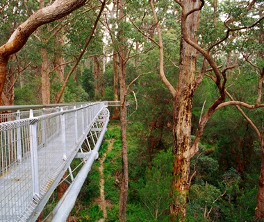 Valleyof the Giants Tree Top Walk, Walpole-NornalupNational Park, Australia