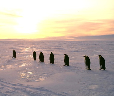201107-w-migrations-penguin