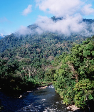 Tropical RainforestHeritage of Sumatra, Indonesia