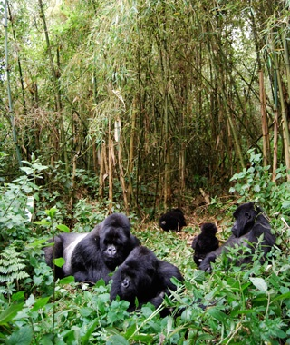 Congo: Virunga National Park