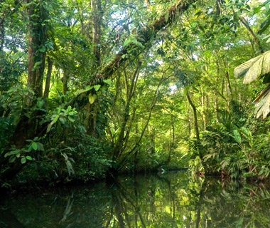 Head into the Wild: Costa Rica