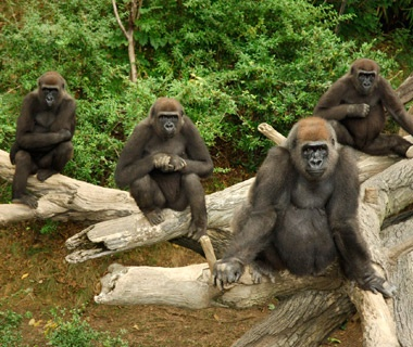 Americas MostVisited Zoos Travel Leisure - The 12 best zoos in the world