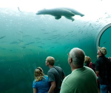 America S Most Visited Zoos Travel Leisure