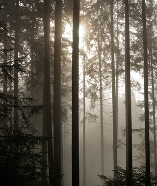 World's Most Haunted Forests | Travel + Leisure