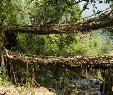 Living Root Bridges: India