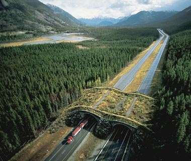 Animal Bridge: Banff National Park, Canada
