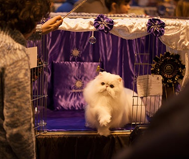 The Supreme Cat Show, Birmingham, U.K.