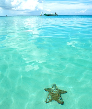 Starfish, Turks and Caicos