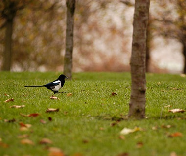 Two Magpies Are Better Than One, United Kingdom